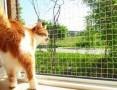 Pozwól aby Twój KOT czuł się bezpiecznie. Osiatkowania balkonów i okien- Śląsk,  śląskie Sosnowiec