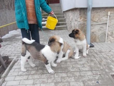 MARTA JOHANIKOVA CHMELOVA DOLINA 38 NITRA 94901 slovensko slovakia