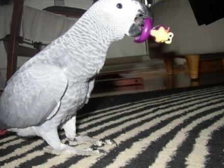 Papugi różnych gatunków i ich urodzajne jaja na sprzedaż