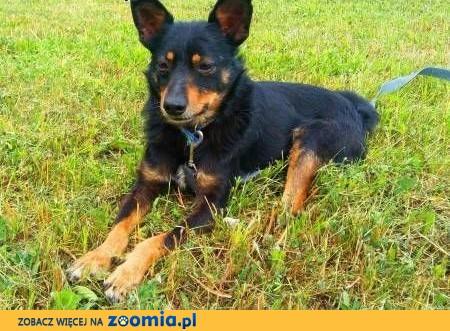 LALUŚ - mały, 9 kg cudowny psiaczek szuka domu,  mazowieckie Warszawa