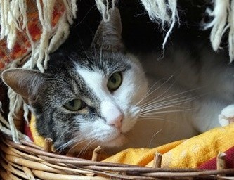 JÓZEK - kot dla konesera