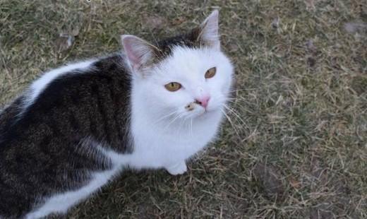 Terapeutka  młoda  proludzka KOTECZKA szuka domu   Koty pospolite cała Polska