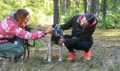 Budrys  radosny  towarzyski psiak do pokochania!   Kundelki cała Polska
