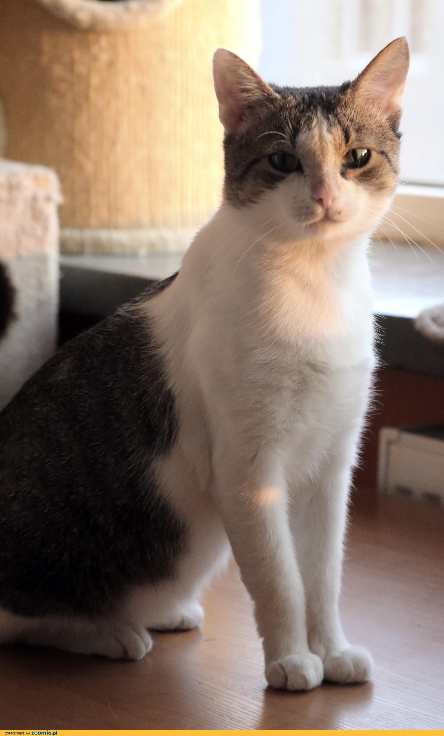 Oddam kota syjamskiego