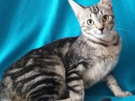 Kotka w tygrysie pręgi znowu szuka domu!