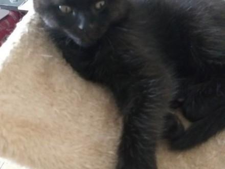 Okazja dla miłośników kotów   dolnośląskie Wałbrzych