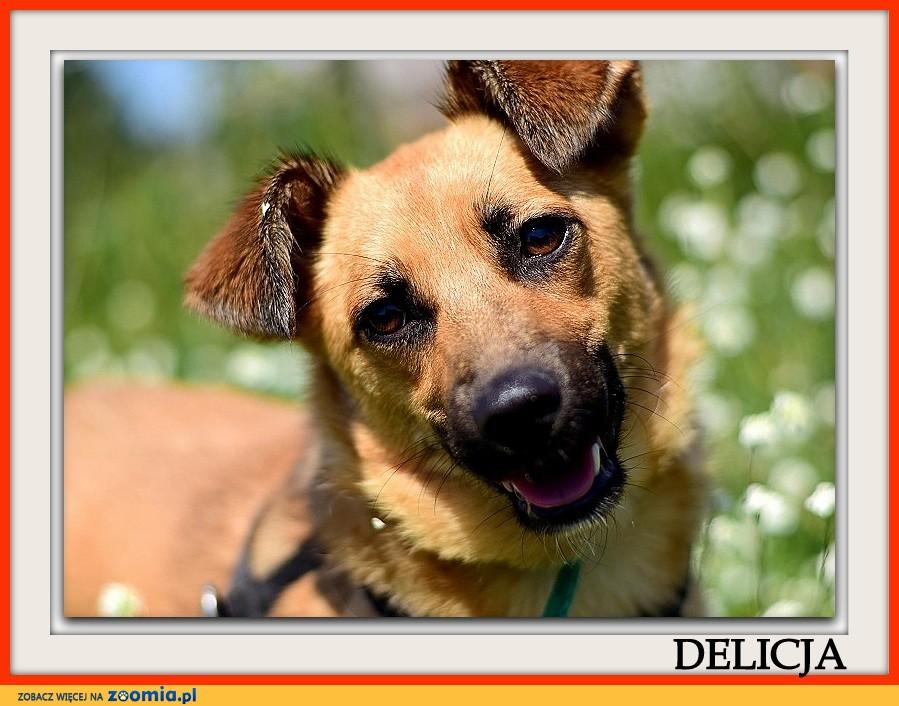 Średnia,radosna,przemiła sterylizowana sunia DELICJA_Adopcja_