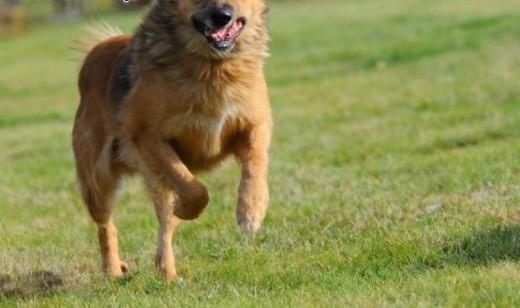Teddy- radosny pies o uroku Misia Uszatka   świętokrzyskie Kielce