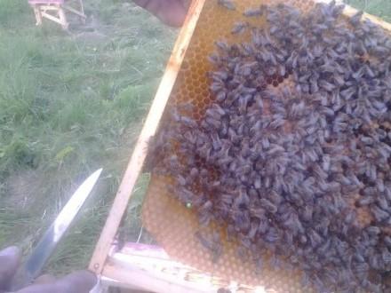 Odkłady pszczele olx