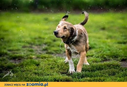 BAŚCIK - niżej zawieszony, radosny psiak - nie czekaj! Powiedz mu TAK!,  śląskie Katowice
