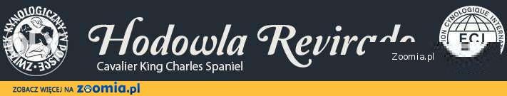 Cavalier King Charles Spaniel Revirado FCI