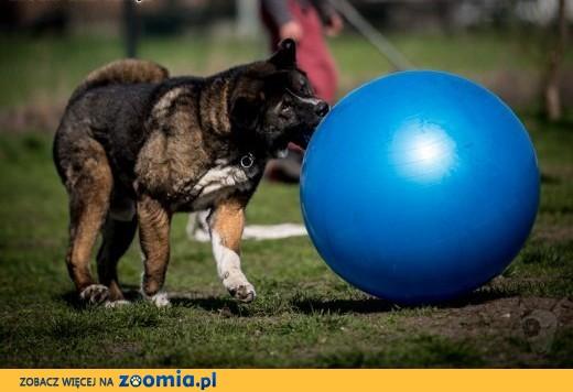 APE - miłośnik piłek :) Kto chętny na wspólną zabawę ???,  śląskie Gliwice