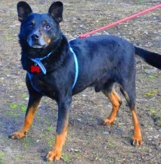 WALKER - psiak  który kocha wszystkich; błaga o dom na stare lata   łódzkie Łódź