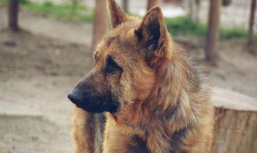 Tarys - pies do pokochania szuka ciepłego domu   mazowieckie Warszawa