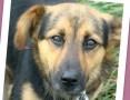 Aktywny,waga 10 kg,przyjazny,kontaktowy pies BOBIK_Adopcja
