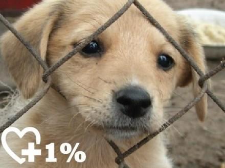 1% dla zwierząt - wesprzyj Fundację Jak Pies z Kotem KRS 0000344879