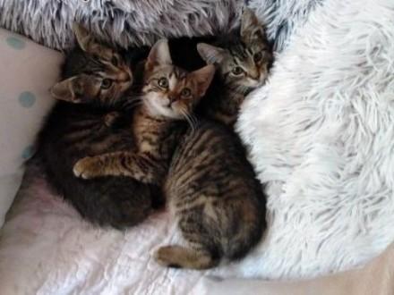 Kociaki Simba i Nala szukają domów   łódzkie Łódź
