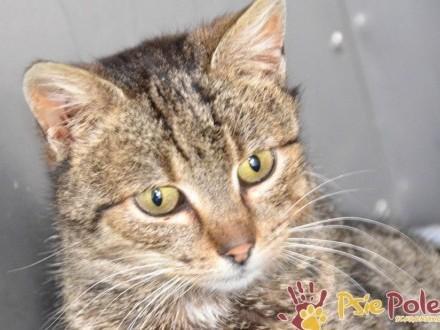 COCCOLINKA-delikatna  śliczna mała bura koteczka prosi o dom  adopcja