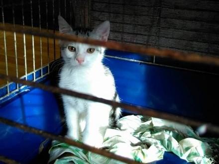 Mały kociak Lemon szuka domu