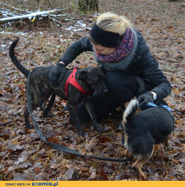 Szanta, psi ideał, młodziutka, posłuszna sunia do pokochania!