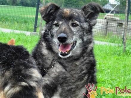 KOMPASIO-kochany  grzeczny  spokojny starszy psiak-szukamy kochającego DOMU
