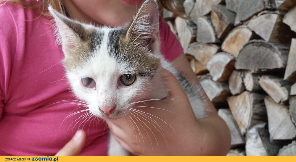Kociaki: Stevie i Bieluch szukają domów,  łódzkie Łódź