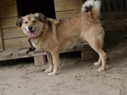 Misiek i Lena  wyjątkowa psia para szuka domu!