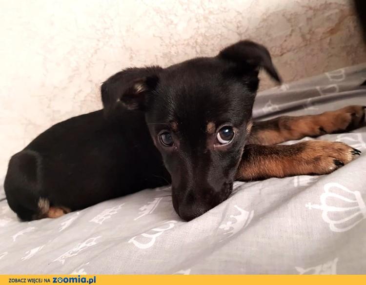 Klara - psia dziecina szuka domu :)