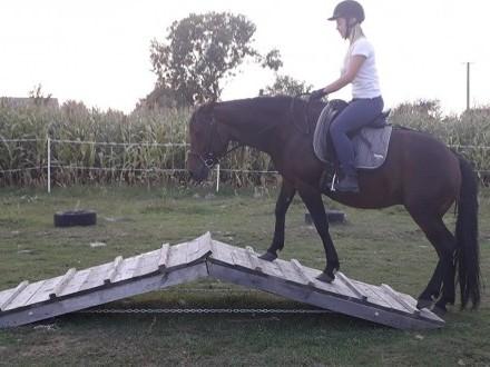 Współdzierżawa konia  bez możliwości przeniesienia