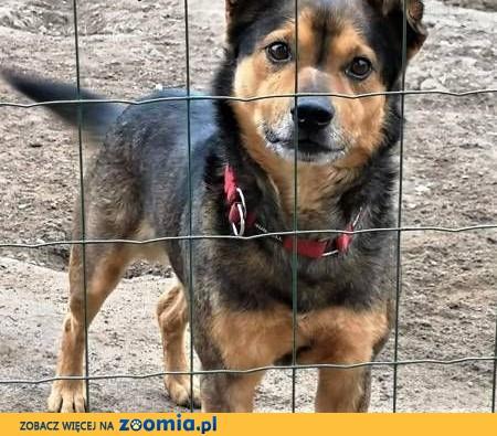 MISIO - kochany, łagodny psiak szuka domu,  małopolskie Kraków