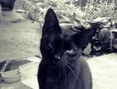 Dwuletnia czarna kotka szuka domu