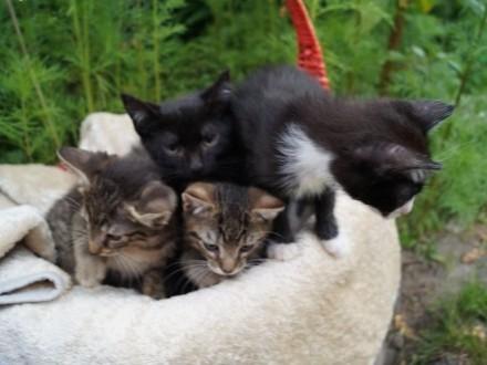 BEZDOMNE KOTKI CZEKAJĄ NA MRUCZĄCE DOMKI   Koty pospolite cała Polska
