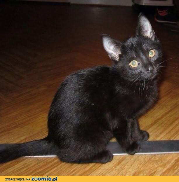 Uroczy mały czarnuszek szuka domku