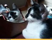 Adele, cudowna koteczka 3 miesięczna szuka domu!