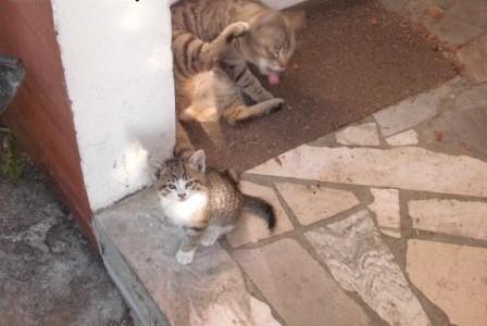 Bezdomne kocięta oddam za darmo   mazowieckie Warszawa