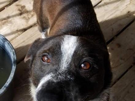 Drakuś  zrównoważony  fajny psiak szuka domu!