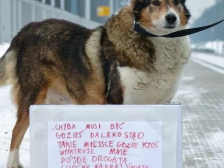 11-letni Elfik stracił dom z dnia na dzień...,  śląskie Częstochowa