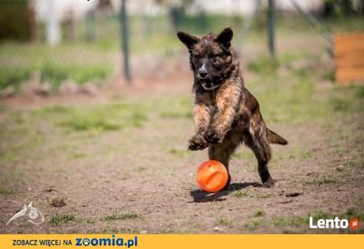 Londi-super psiak tylko człowieka mu brak!,  dolnośląskie Wrocław
