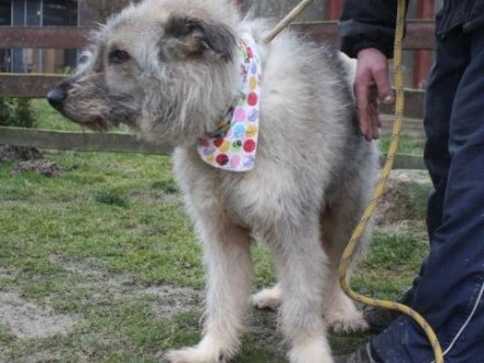 Wesoły  towarzyski kudłacz  kandydat na psa rodzinnego!