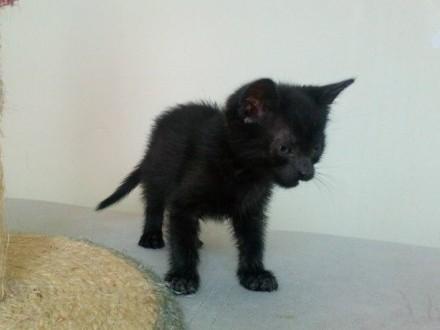 Mała kotka Landrynka szuka domu