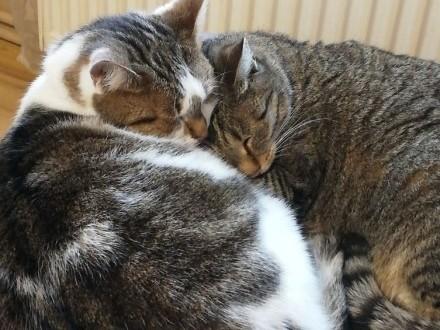 Oddam dwie kotki Sisi;Lusi