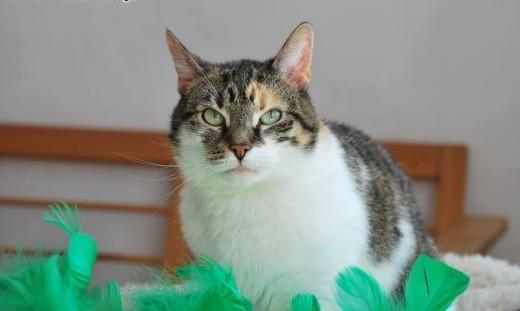 Sasza- kotka do pokochania   kujawsko-pomorskie Toruń