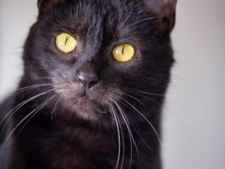 Nala - śliczna czarna kociczka szuka domu