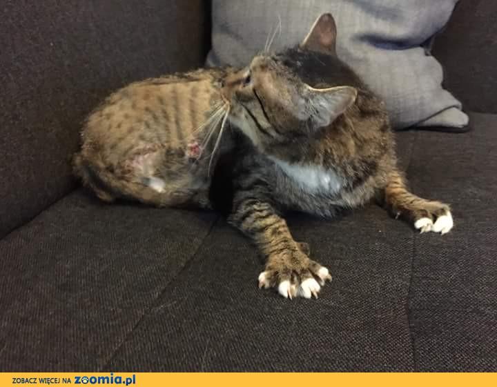 Kotek Trojłapek szuka cieplutkiego domku i głaszczące ręce