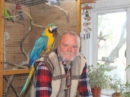 Zdrowe i mocne papugi niebieskie i złote ary