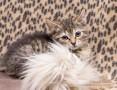 Kociaki z Gdańskiej - domku gdzie jesteś?