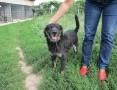 Drops, pozytywny, młody PIES IDEALNY, radosny i śliczny pies