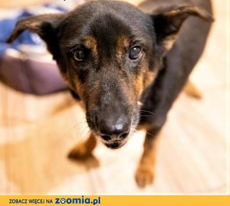 YUKA - psia babunia, porzucona po śmierci Pani błaga o dom!,  mazowieckie Warszawa