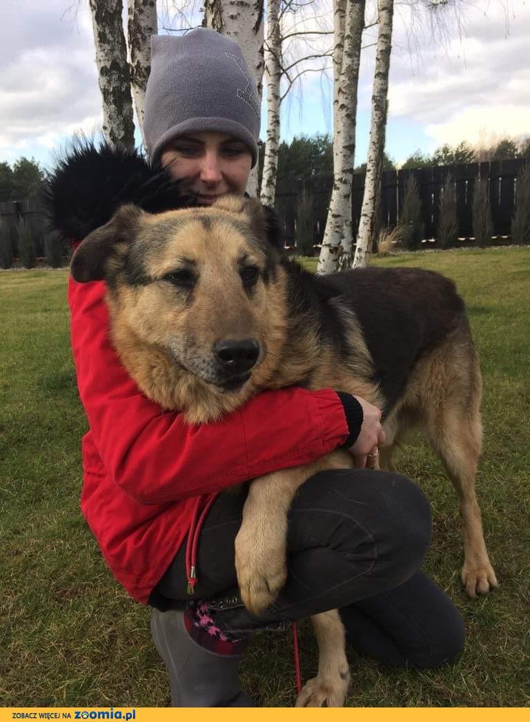Alf, misiek przytulas, niekonfliktowy psiak do pokochania!