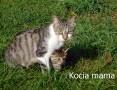 Szukamy domu dla przygarniętej kotki,  śląskie Lubliniec